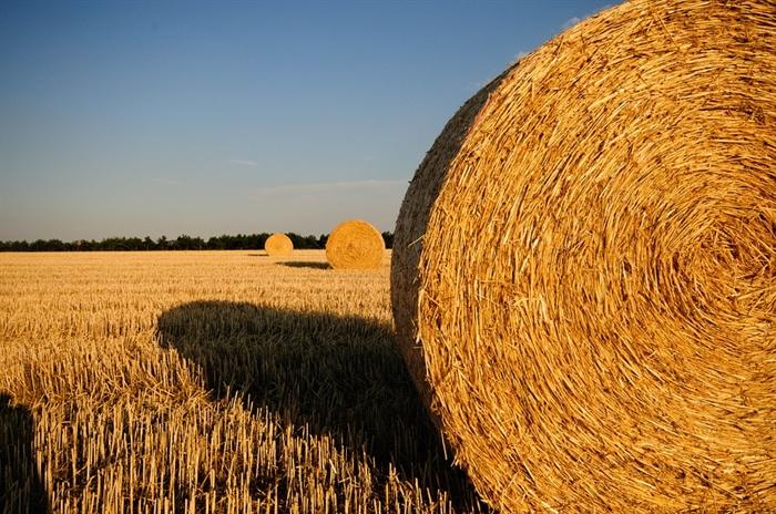 Национальный союз агростраховщиков: вПриволжье небудет рекордного урожая