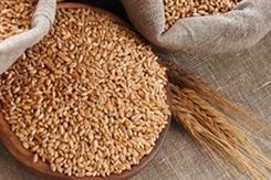 В восьми районах области полностью убран урожай зерновых культур