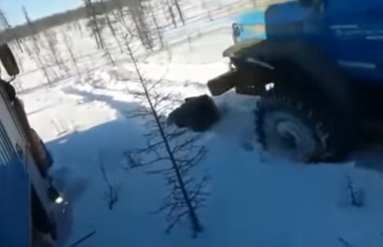 В Якутии возбудили уголовное дело по факту убийства вахтовиками медведя