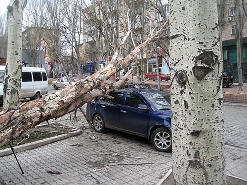 ВУльяновке на Лексус упала ветка, пострадал шофёр