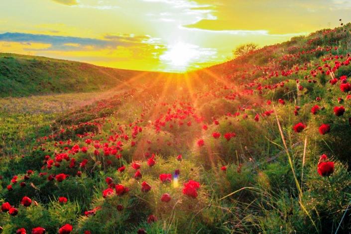 Картинки природы ульяновской области