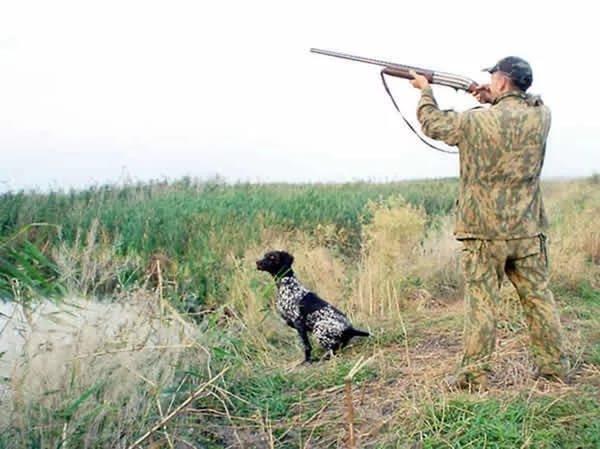 Димитровградца осудили заубийство краснокнижного лебедя