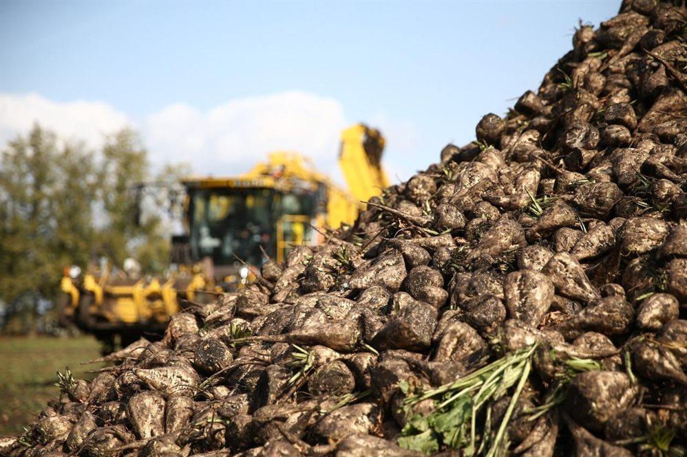 Курские земледельцы собрали более 3 млн тонн сахарной свёклы