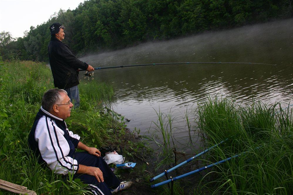 Рыбы реки волги картинки